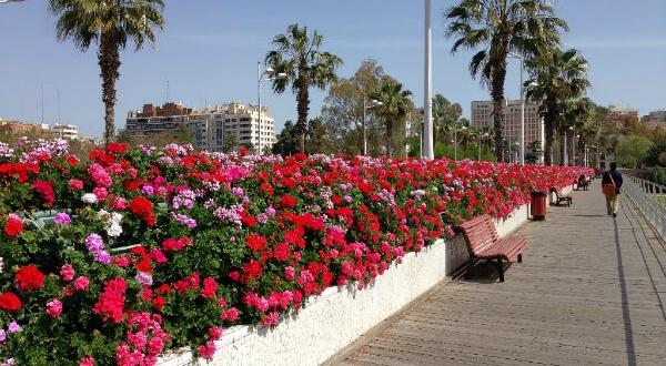 バレンシア市内にはいくつもの橋が架けられています