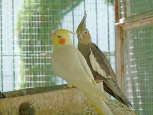 公園の中には大きい鳥かごがあって鳥たちにエサをあげることができます