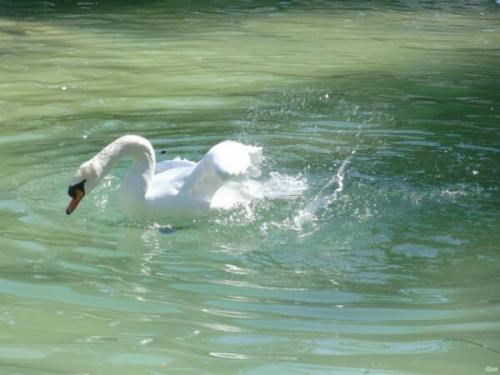 公園内の湖にはカモ・白鳥などの動物もいます