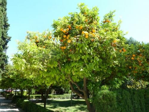 バレンシアと言えばオレンジ!
