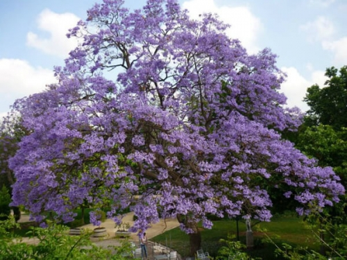ジャカルタの花もこんなに綺麗に咲き乱れます