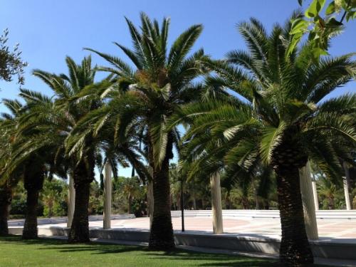 バレンシアではどこへ行ってもヤシの木が至る所に。