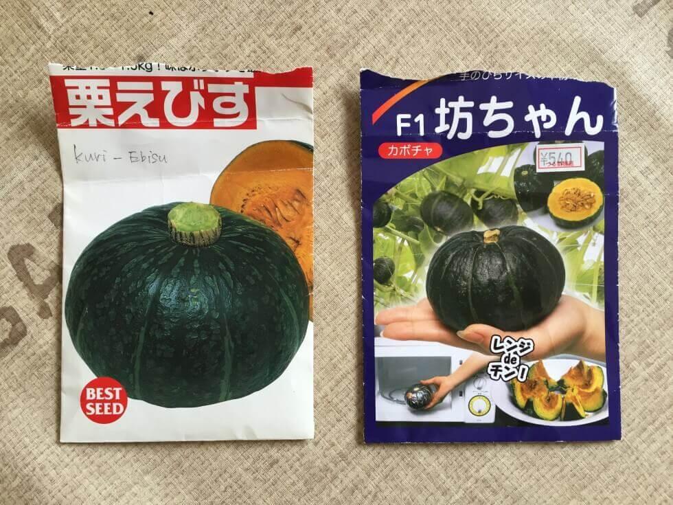 kabocha-planting-seeds1