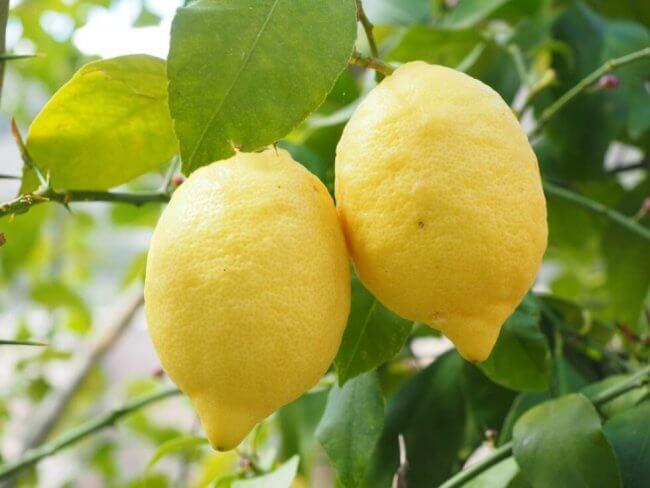 lemon-ponzu